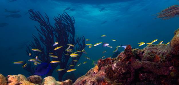 Diving in Exotic Places