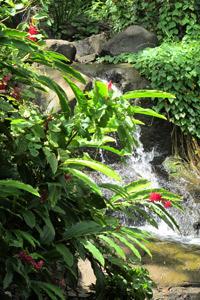 Caribbean creek