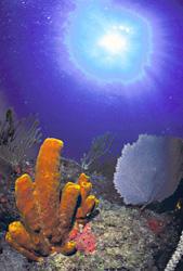 Reef_sm