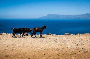 Goats coastal charter