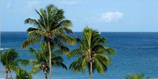 Dominica, Martinique, and St. Lucia