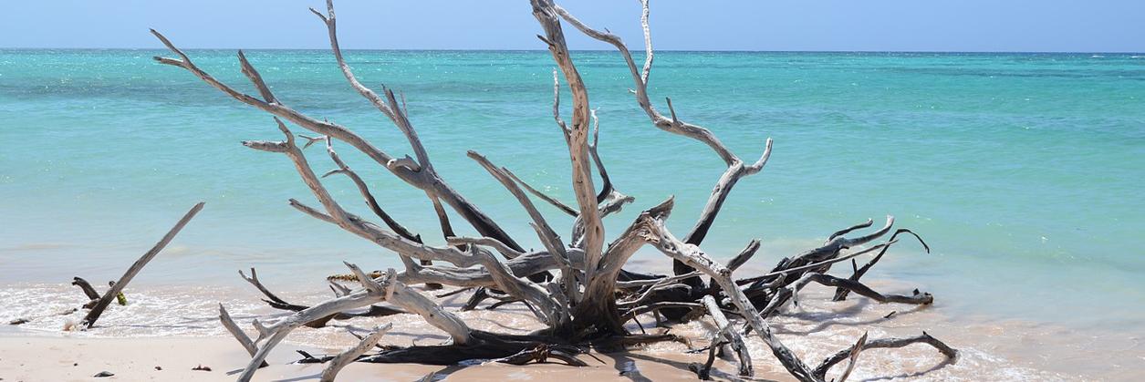 beachcuba